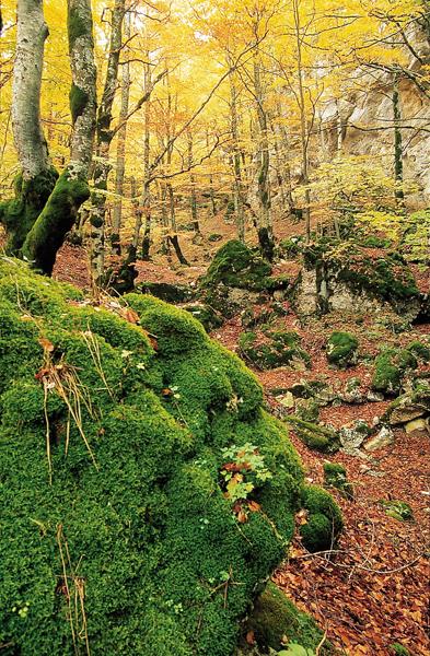 Parco Nazionale Abruzzo, Sottobosco