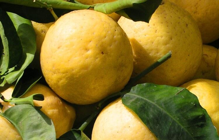 citroenen campania limoncello