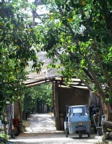 limoncello boerderij citroenen campania