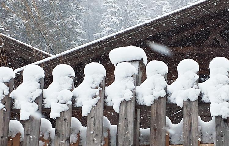 Sneeuw op een hek © Claudia Zanin