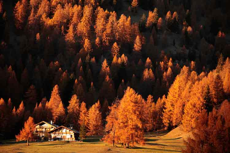 Val di Fiemme, Bellamonte © F. Modica