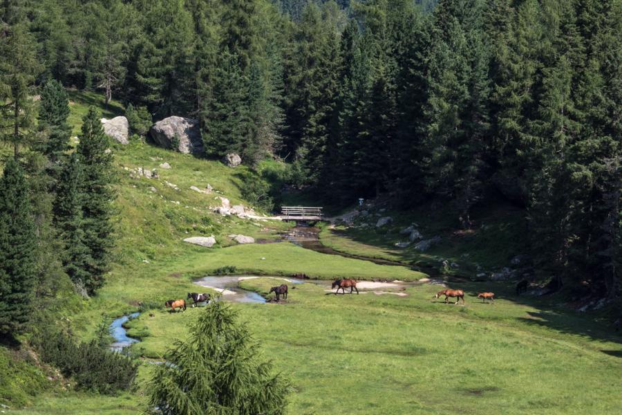 Mountainbiken in Val Campelle, Valsugana