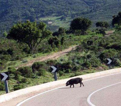 Sardegna - Fotoverslag van Katrien Foets